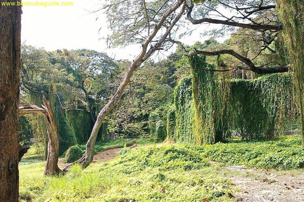3 parque almendares havana vedado