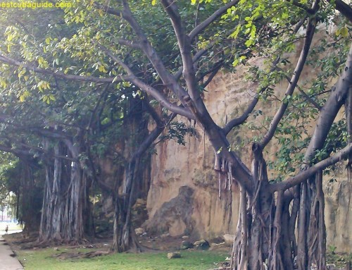 Vines, Trees and Nature, taking over Havana