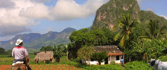 Hose and man walking through Vinales valley in Cuba